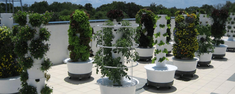 Urban Garden Png